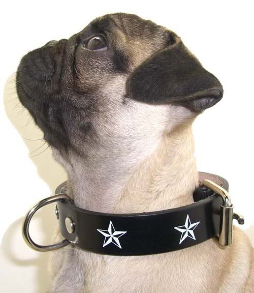 Nautic Star Stern rockabilly punk rock Hundehalsband XS